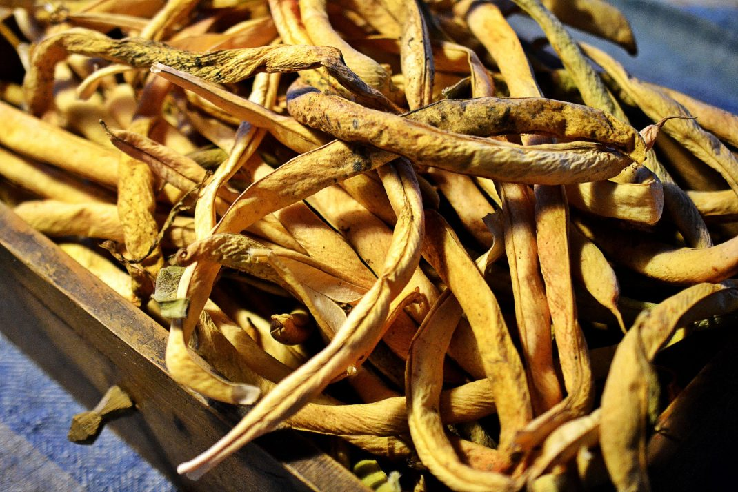 Torkade baljor av bönor ligger i en trälåda.