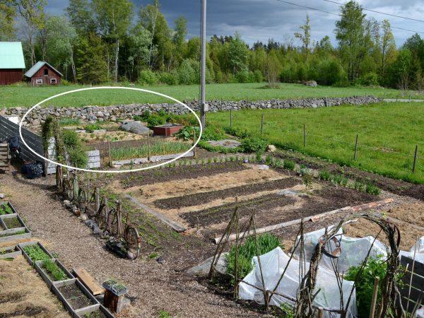 Översiktsbild över köksträdgården.