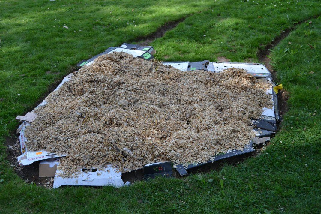 Hönsgödsel över kartonger på gräsmattan.No-dig gardening, manure on cardboard on the lawn.