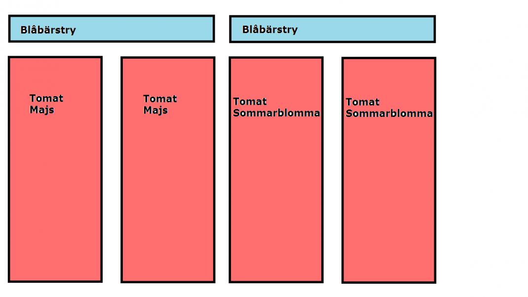 En odlingsplan för tomatbäddarna.