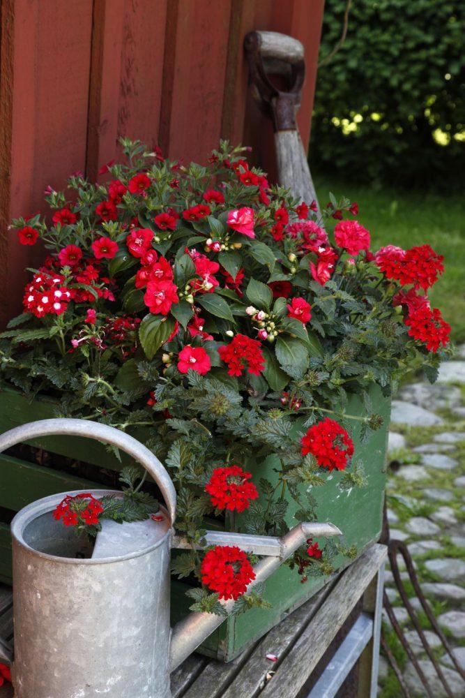 Vackra blommor i röda färger i en låda av grönt trä.