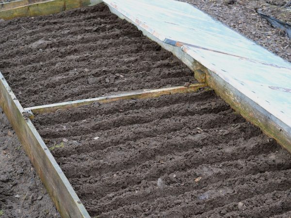 Jord uppdragen i fåror i en odlingsram i köksträdgården.
