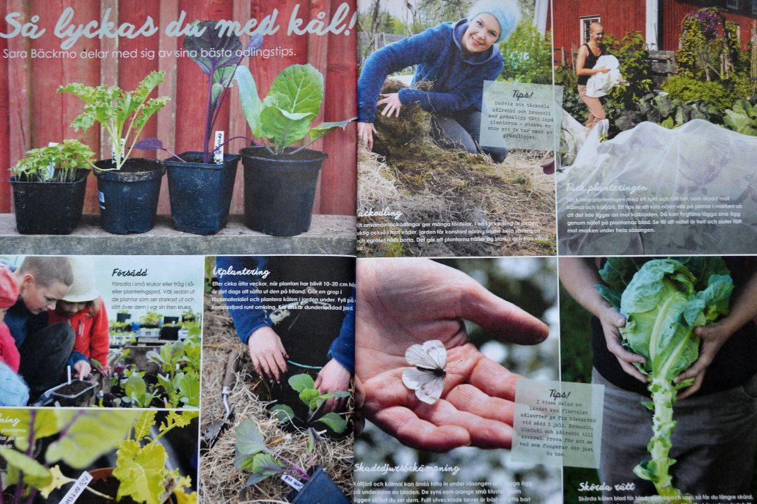 Bilder ur reportaget om Skillnadens Trädgård i Trädgårdslandet. Fotograf: Richard Lindor.