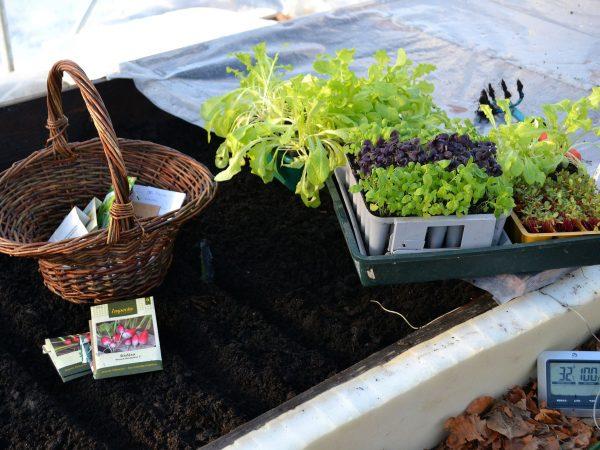 Små gröna plantor och fröpåsar står på varmbänken och väntar på att bli planterade.