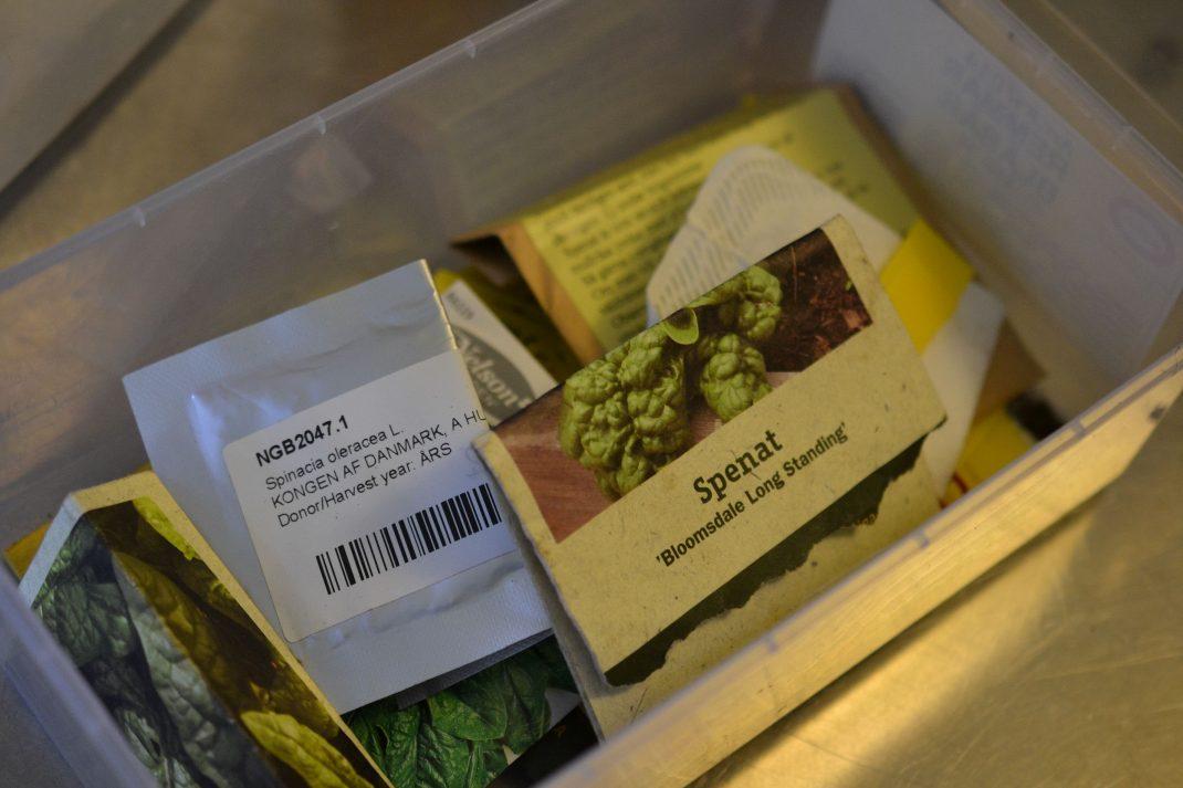 Påsar med spenatfrön i en plastlåda.