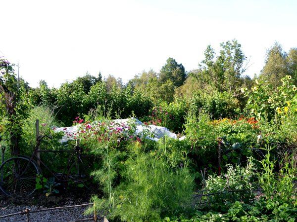 Vy över trädgården i sommarskrud.