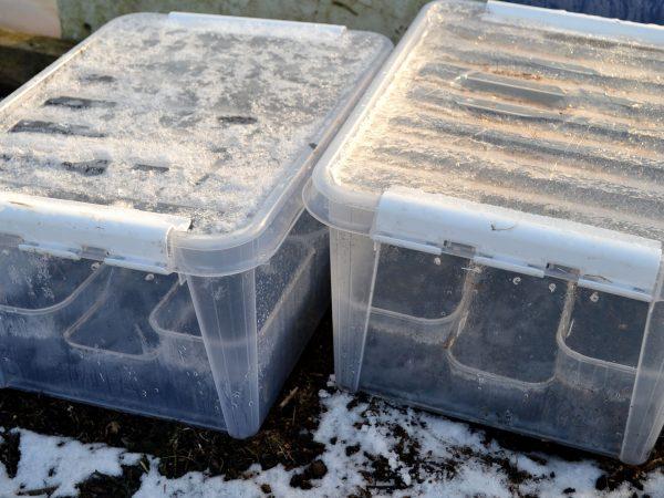 Sådder i plastbackar utomhus.