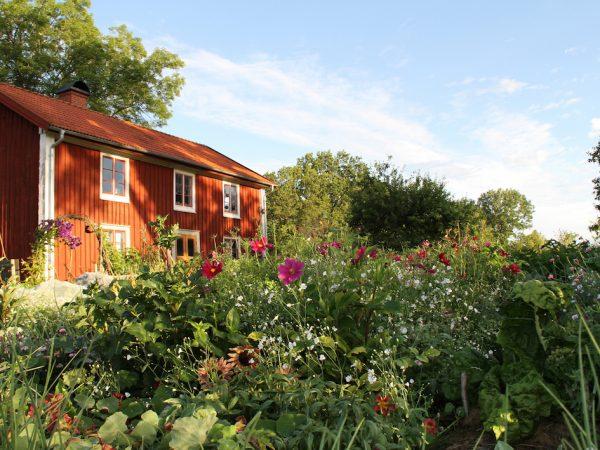 Skillnadens Trädgård i full sommarprakt.