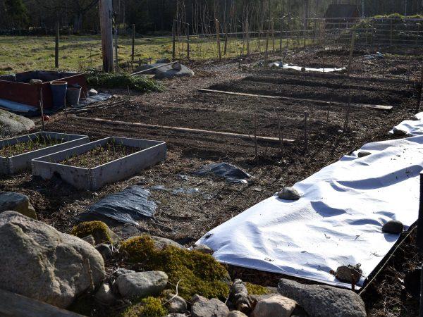 Köksträdgården vid plank och stenmur när vårsolen ligger på.