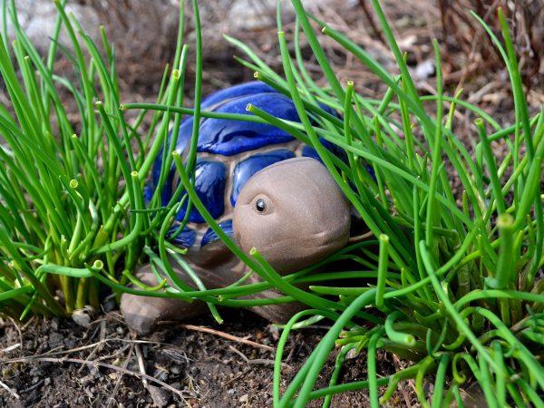 En sköldpadda i keramik tittar fram mellan två gräslöksplantor.