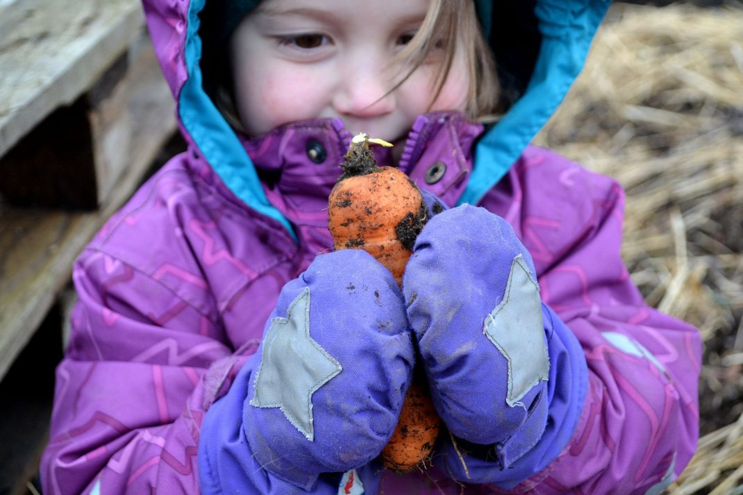 Ett litet barn håller en nyskördad morot mellan vantarna.