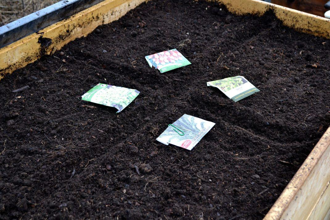 En pallkrage har såtts med fyra grönsaker.