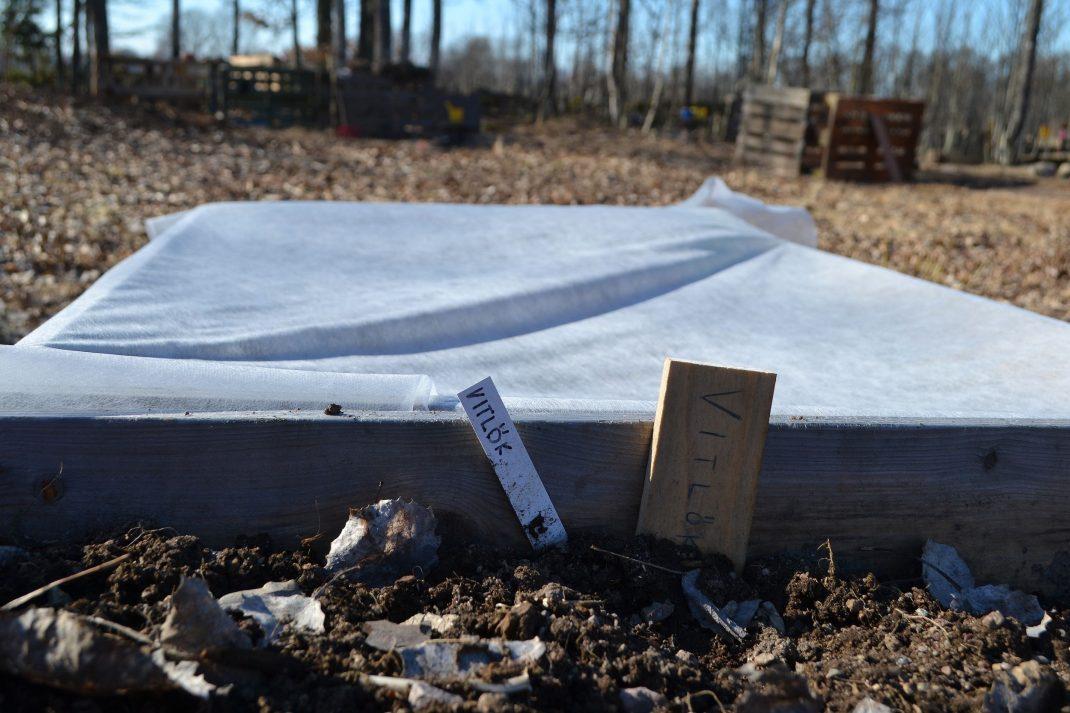En pallkrage med två etiketter där det står vitlök på.