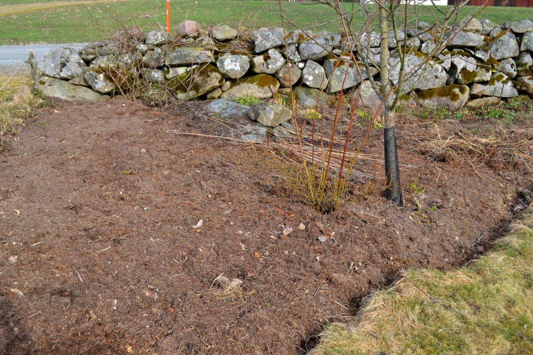 En stor rabatt med jord längs stenmur. No-dig flower beds, a large bed along the stone wall.