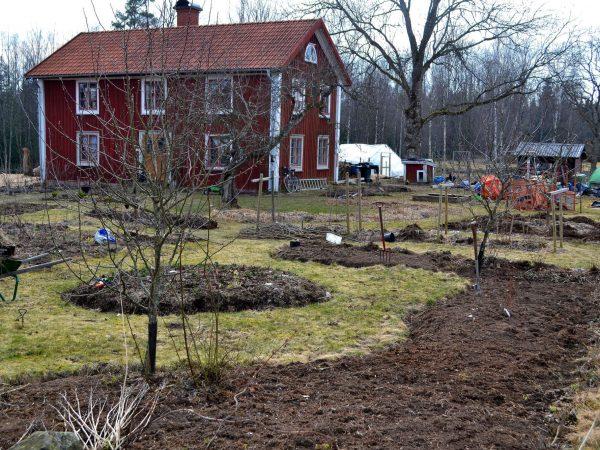 Böljande nya rabatter med jord framför huset.