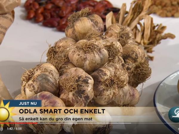 Skärmdump från klipp i tv4 med vitlöksfläta som ligger på ett bord.