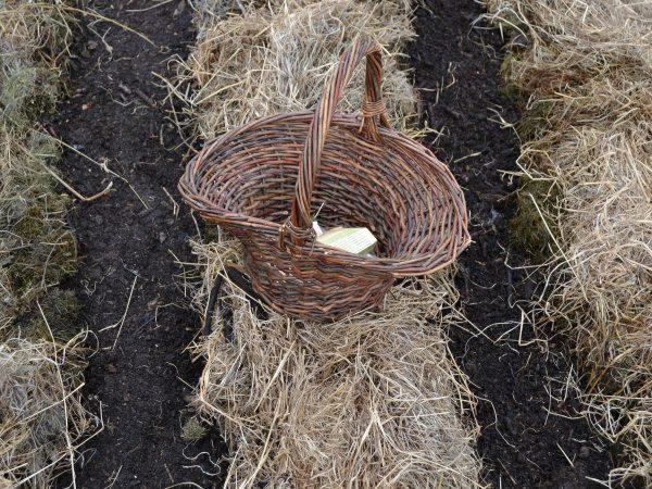 En korg med fröer står i en odlingsbädd.