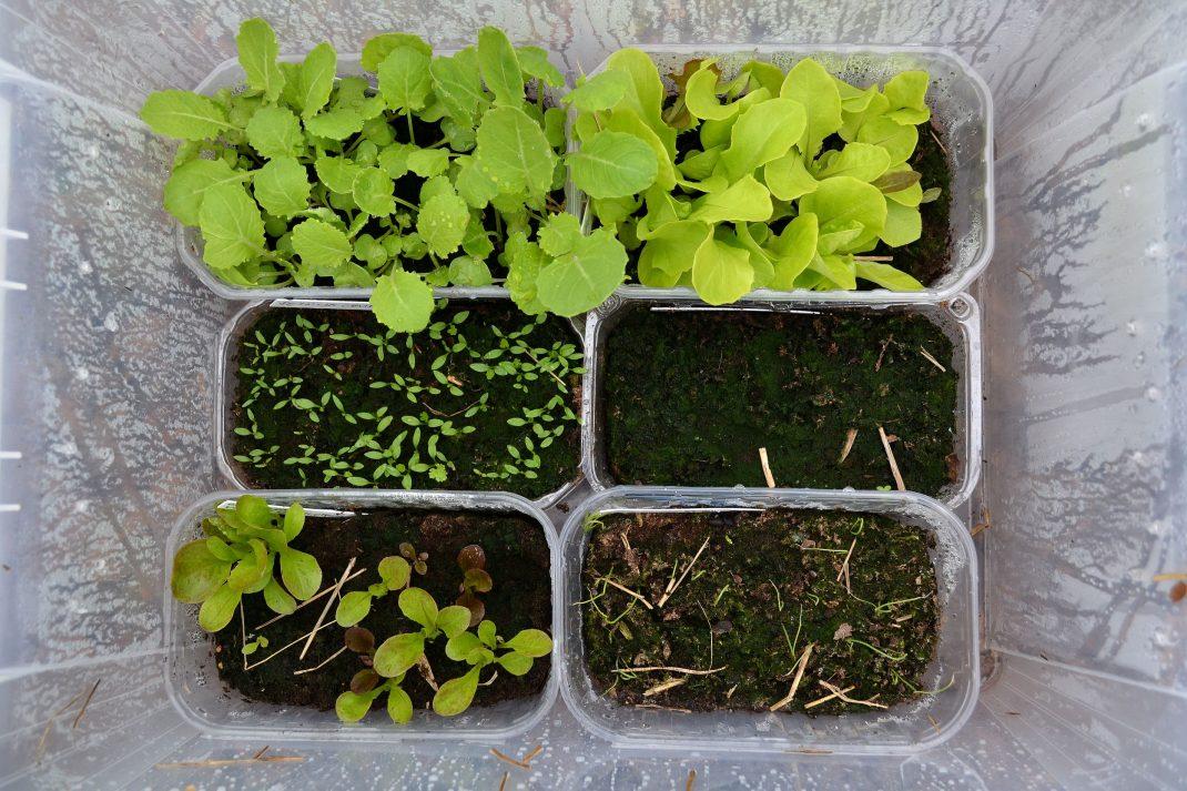 Tråg med grönsaker i olika stadier står i plastbacken.