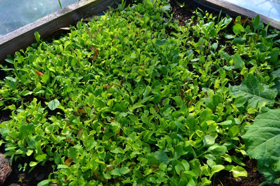 En grön matta av blad i en bädd.