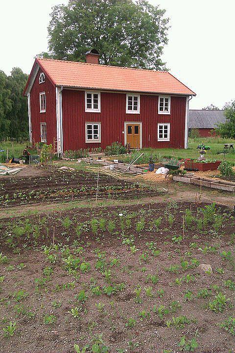 Köksträdgården och huset alldeles i starten.