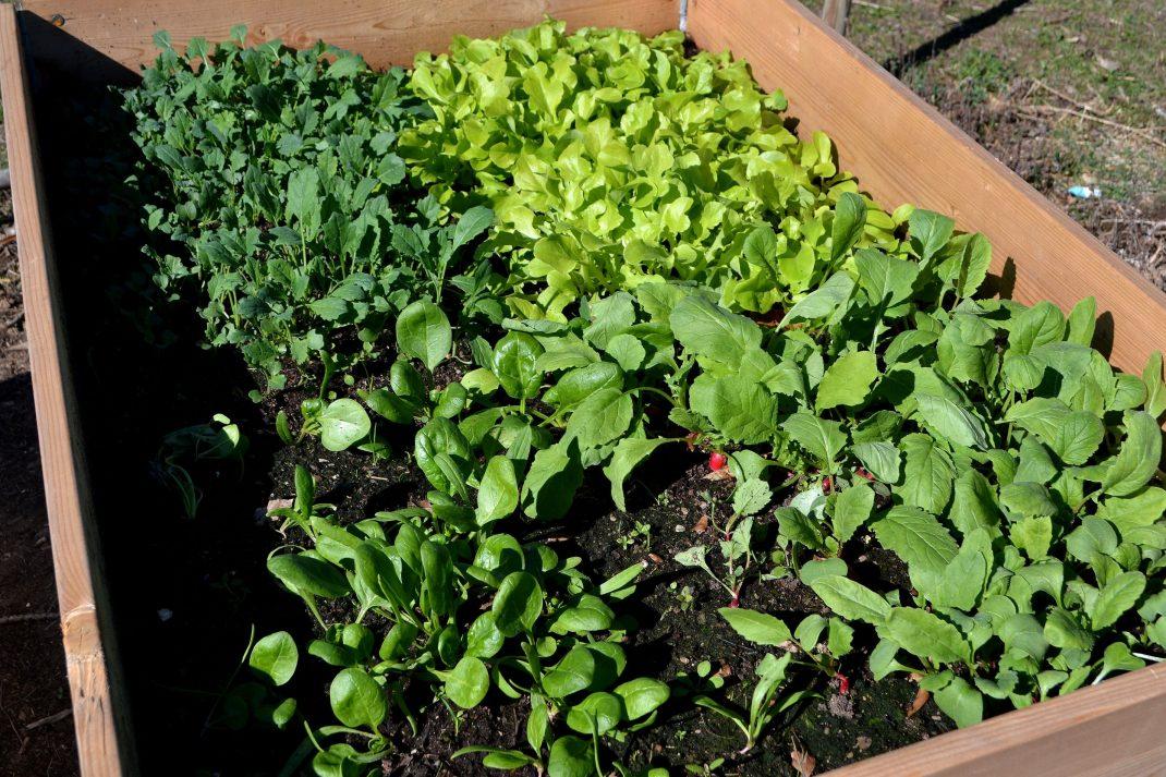 En pallkrage sedd från ovan med ytan indelad i fyra kvartar med olika grönsaker.
