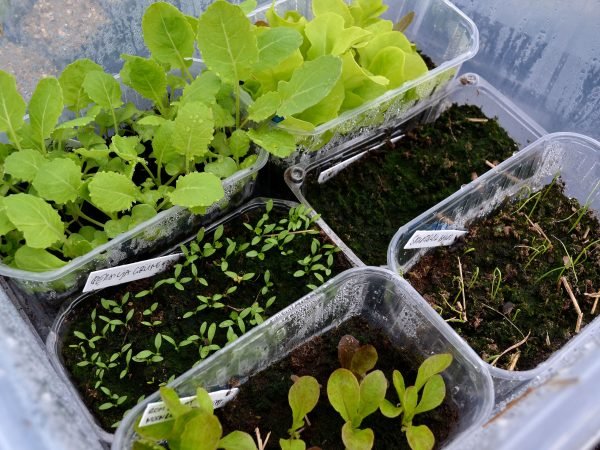 Grönsaker i tråg i genomskinlig plastback.