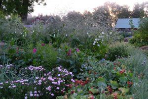 Köksträdgården en tidig morgon i juli.