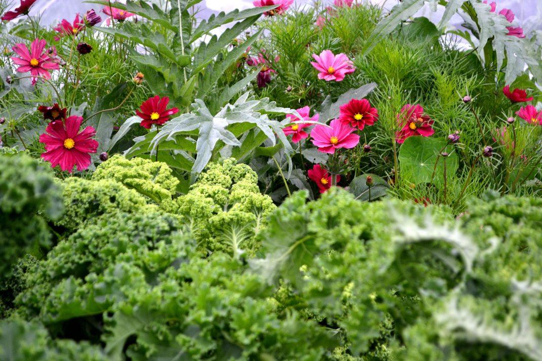 Ett grönt hav av grönsaker med rosa blommor insprängda i.