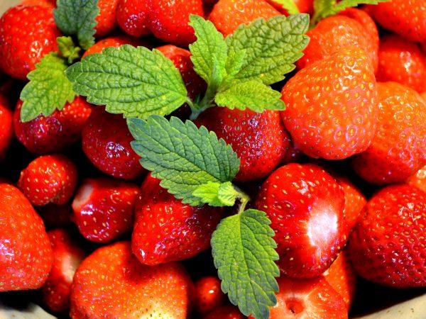 Vackert röda jordgubbar med citronmelisblad på toppen.