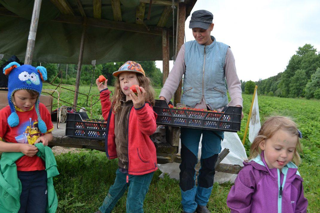 Familjen poserar framför jordgubbsfältet, barnen gör knasiga miner.