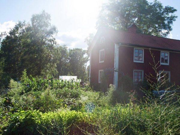 Huset Skillnadens med köksträdgården framför en solig sommardag.