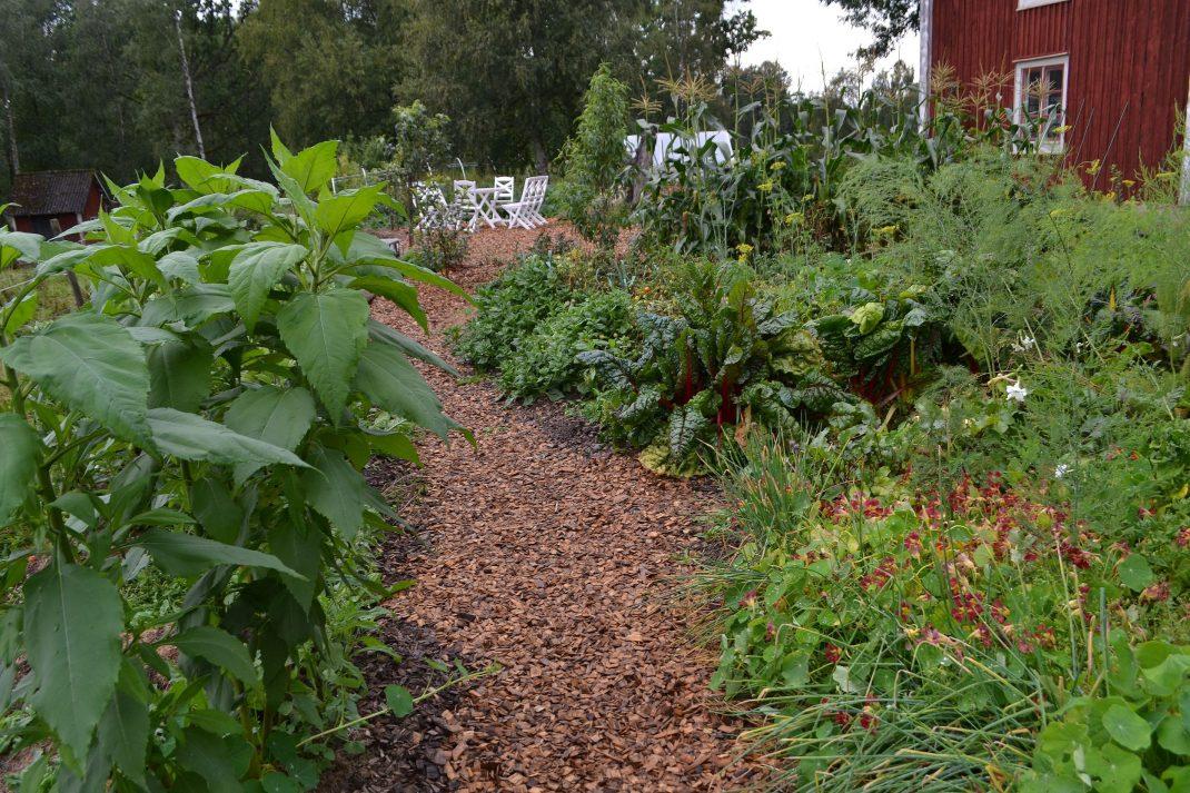 Del av köksträdgården med gångar och land.