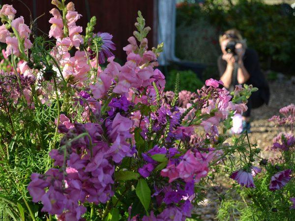 Ett fång blommor framför en fotograf.