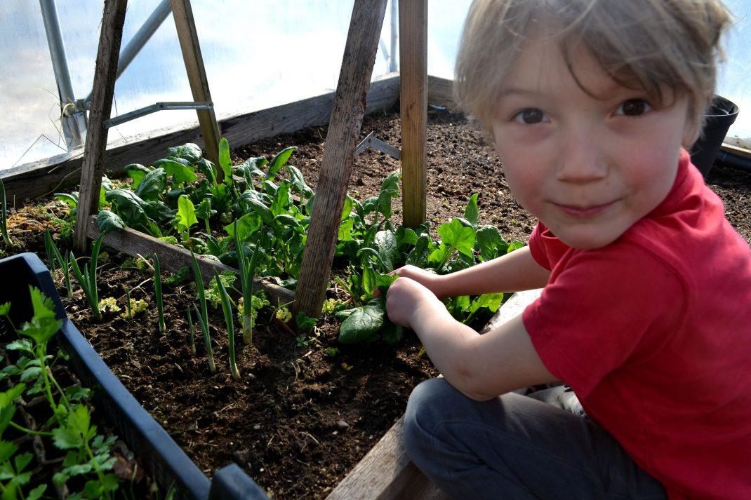 Barn sitter vid plantor av spenat och äter.