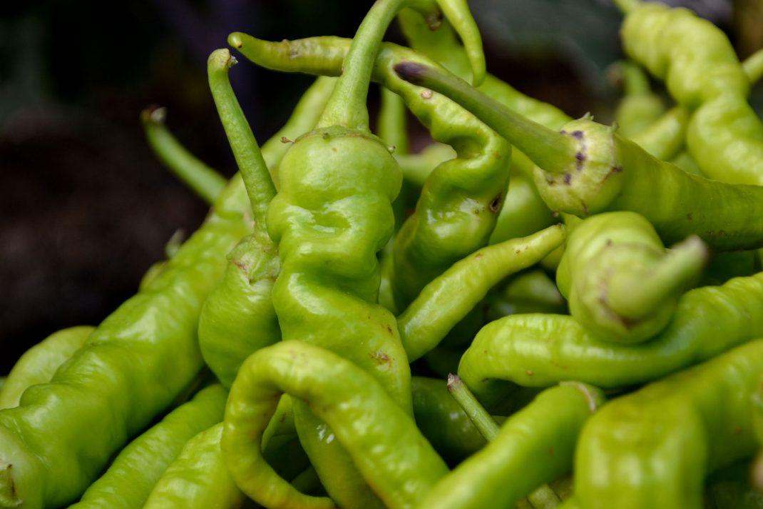 Närbild på ljusgröna paprikafrukter.