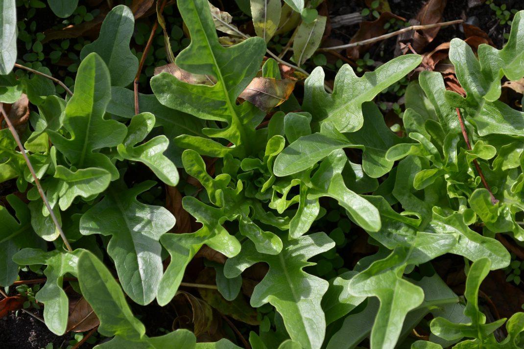 Fina friska gröna plantor. Små.