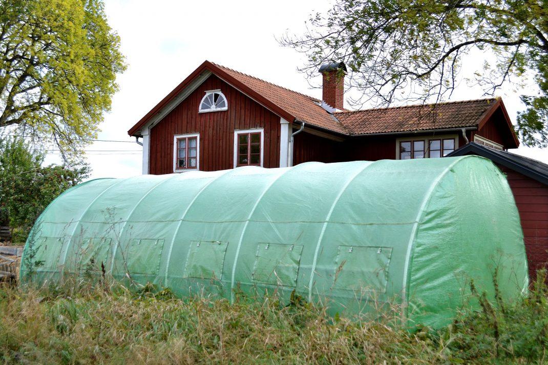 Ett grönt plastväxthus i tunnelform.