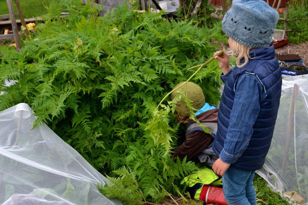 Barn står och jobbar vid en stor planta körvel.