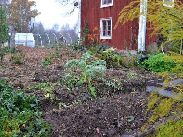 Upphöjda bäddar i ett av kvarteren i köksträdgården.