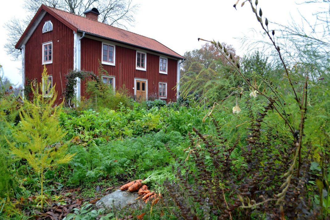 Ett grönt kvarter mitt i köksträdgården framför huset.