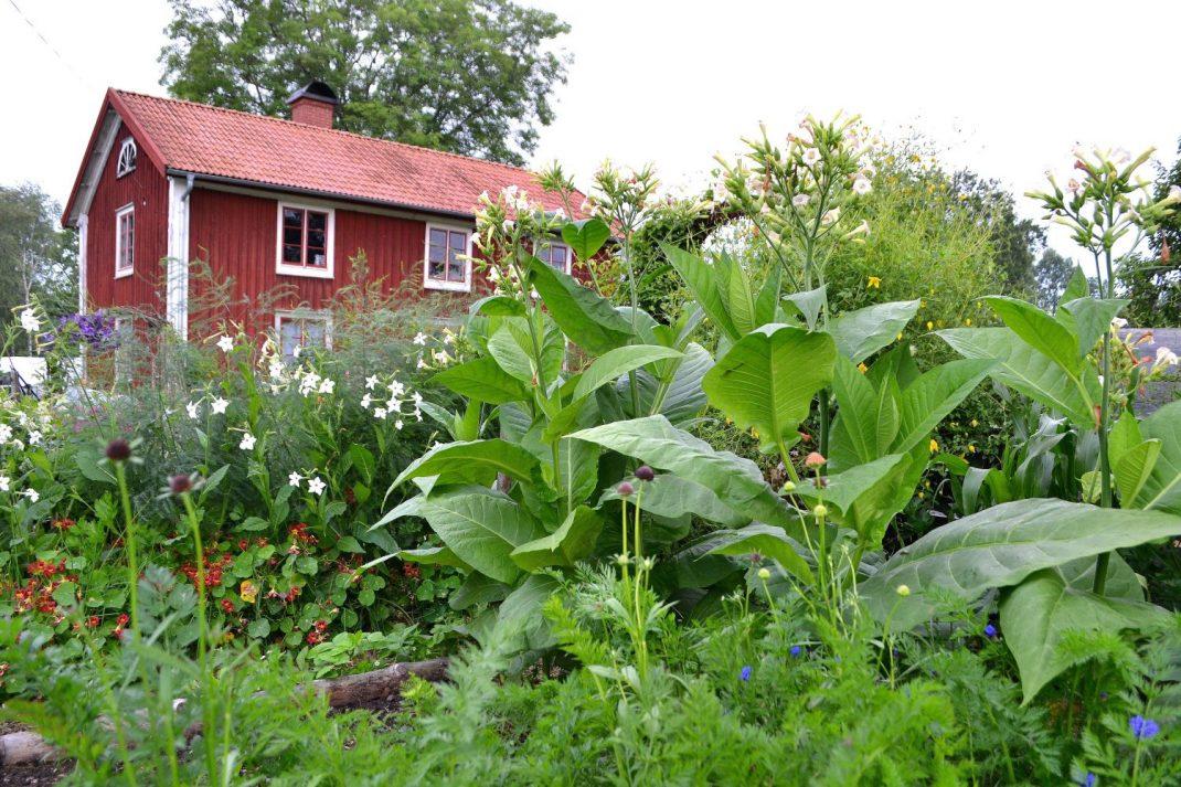 Under helgen gör vi ett besök i min trädgård, som visserligen inte är så grönskande som på bild just i mars men ändå kan bjuda på inspiration.