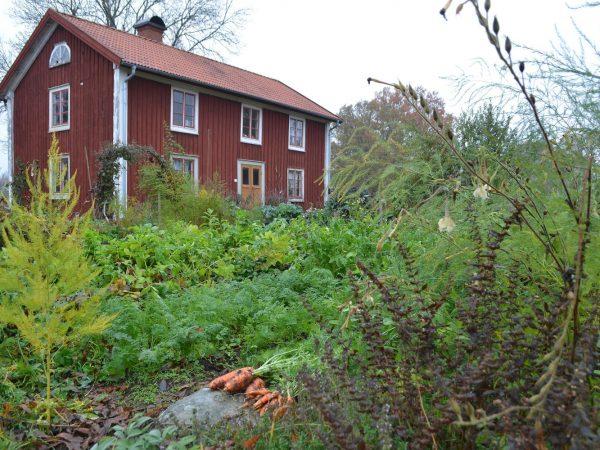 Köksträdgården i november