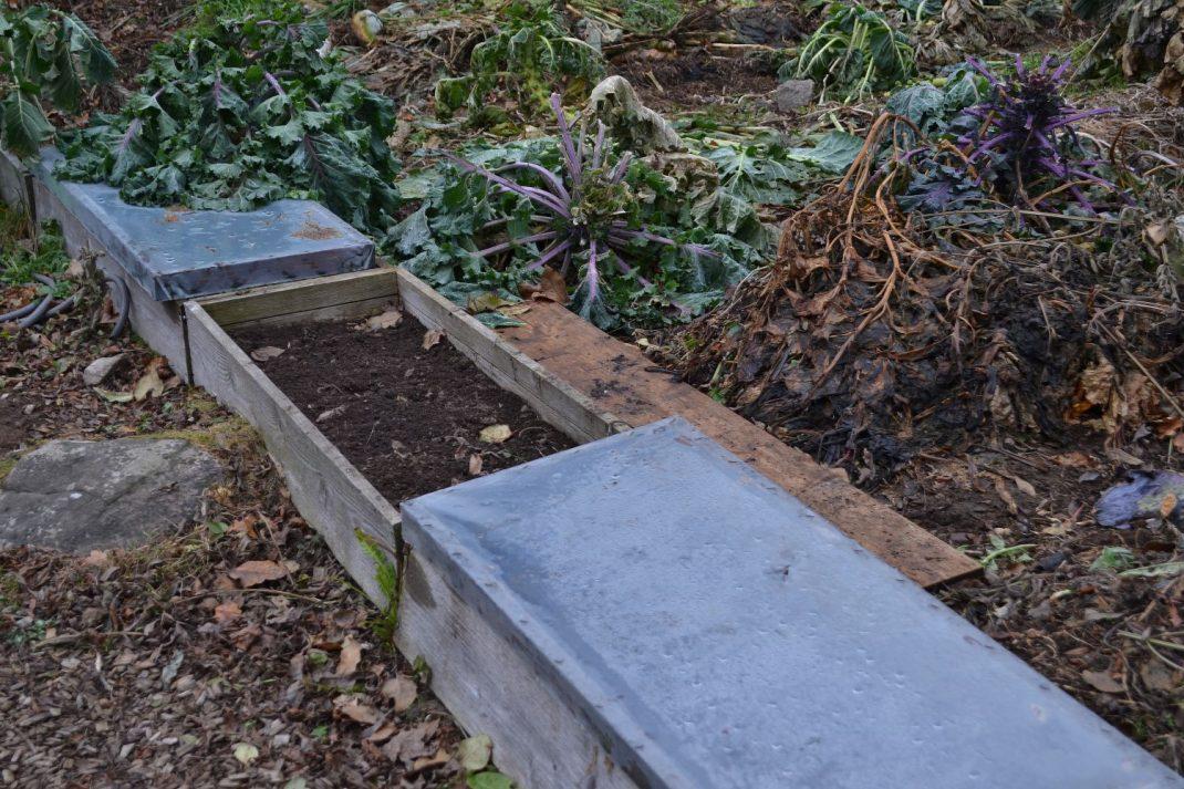 Små odlingslådor i köksträdgården, täckta med locka av plast.
