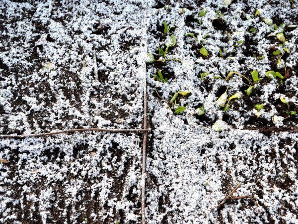 Jordyta täckt av ett tunt lager snö.
