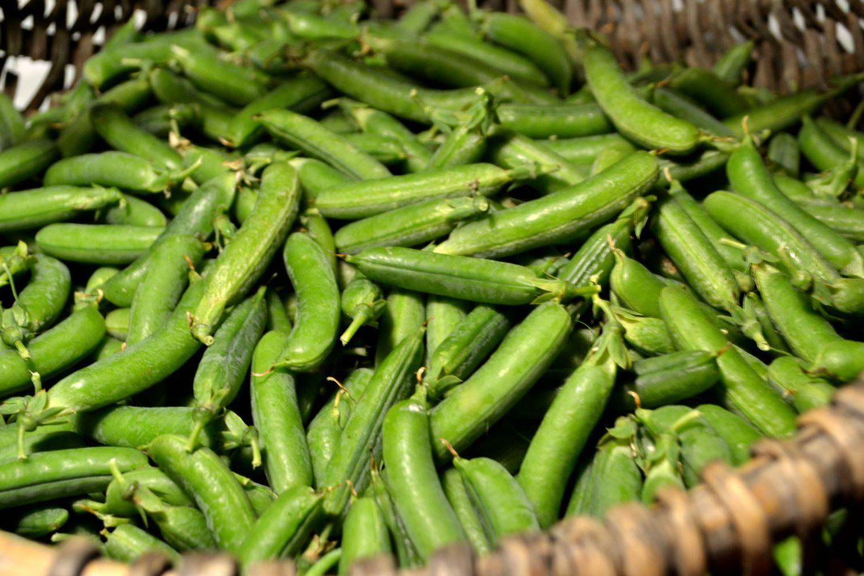 odla gröna ärtor