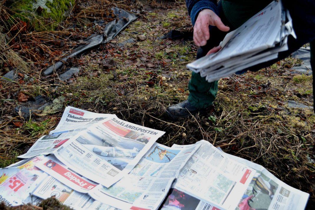 Tidningar läggs på en orensad odlingsbädd.