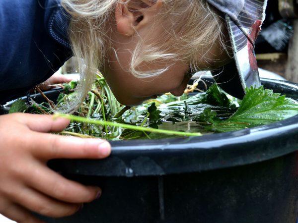 En tunna med nässelvatten och ett barn som luktare