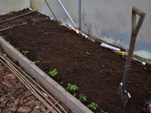 En odlingsbädd i tunnelväxthuset fylld med jord.