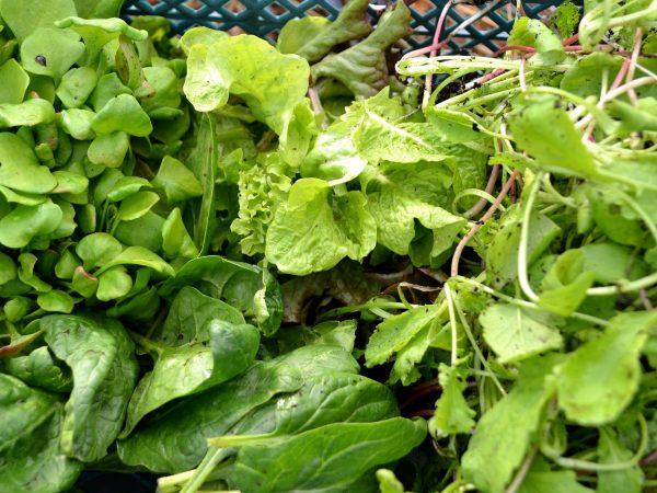 Gröna bladgrönsaker i en back.
