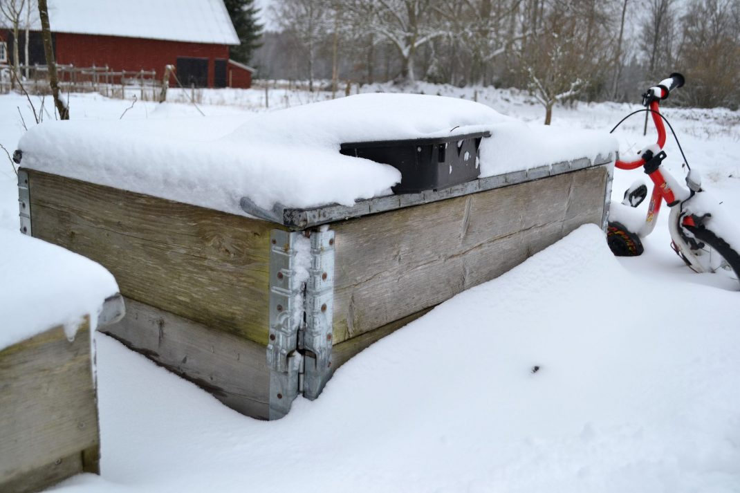 Pallkragar med lock på i snön. March gardening, pallet collars.